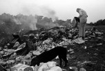Humans and animals pick through pick through garbage at an open burn waste dump in the rural Ozarks-1976.